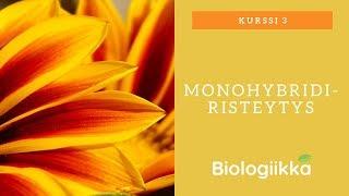 Periytymisen perusteet: Monohybridiristeytys
