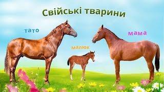 Свійські тварини. Тата, мами, малюки. Картинки тварин. Звуки тварин.