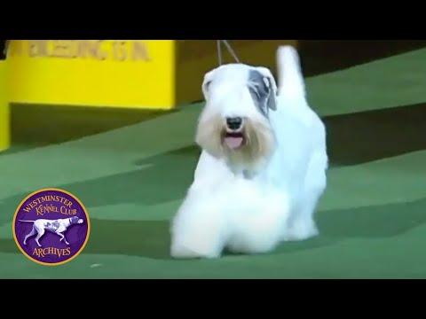 WKC Archives: Sealyham Terrier, Charmin