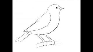как быстро нарисовать Птицу простым карандашом