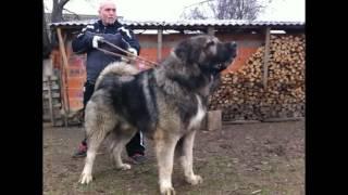 5 największych i najskuteczniejsze psów na świecie ☺😃
