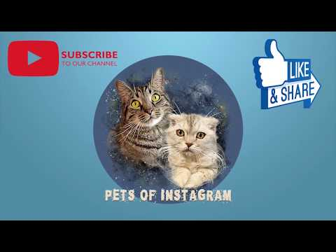 Pets of Instagram Funny Cats @meatball.and.luna Compilation | September 2019