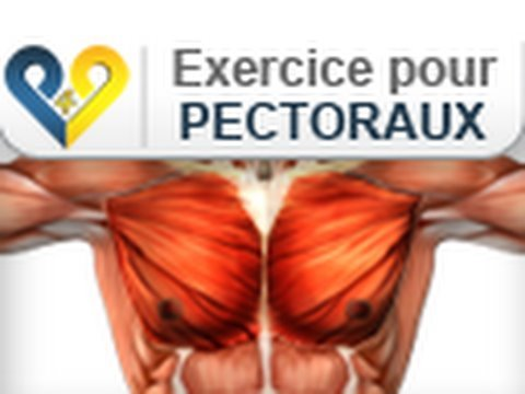 Musculation pectoraux: Pompes - YouTube