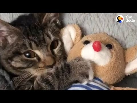 Kitten Has The Cutest Bedtime Routine | The Dodo