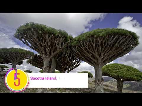 Top 10 best tourist places in Yemen