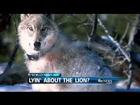 WEBCAST: Lyin` About the Lion