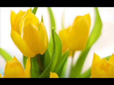 Concerto No. 1 in E Op.8 No.1 'La primavera' RV 269 by Vivaldi Mp3