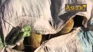 バオバブ・メリンジョ・植物酵素 トリプル配合サプリ ASHER (アシェル)