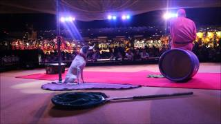 Dog Show in Circus Circus Reno