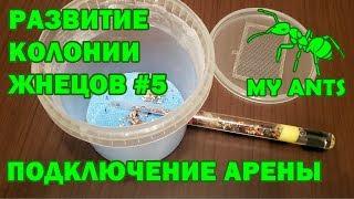 Развитие колонии жнецов #5 (Подключение арены)