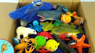 Learn OCEAN Animals Names and Colors with Toys in Box by Squishee Nugget