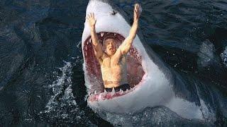 11 Amazing Shark Facts