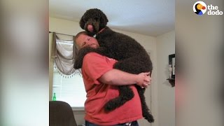 Big Dog Demands To Be Held Like A Baby