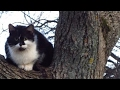 [Cat videos]  Cute cat in a tree waiting for me all morning