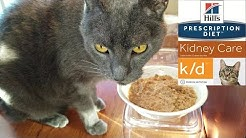 Thunder Tries the Hill's Prescription Diet k/d Kidney Care Wet Cat Food