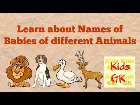 Names of Animals and their Young Ones | Playquiz2win