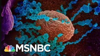 Rimoin: 'We Can't Be Worried About Politics, We Need To Worry About A Virus' | The 11th Hour | MSNBC