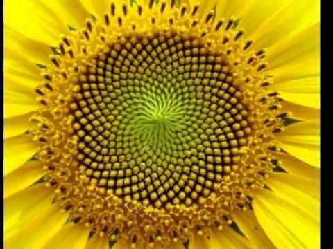 видео: Фрактальная геометрия Природы