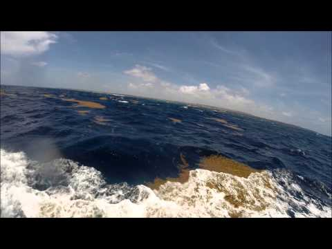 Barbados Fishing Boat Trip with Tackle It II -  2014