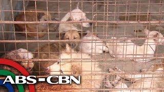 Maraming animal pound di rehistrado, lumalabag sa batas   TV Patrol