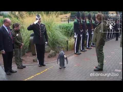 Sir Nils Olav promoted to Brigadier by Norwegian King's Guard