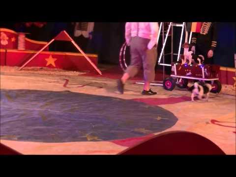 chien cirque