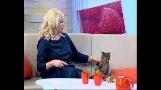 Создатель породы каракет Ирина Назарова: у этих кошек повадки собаки