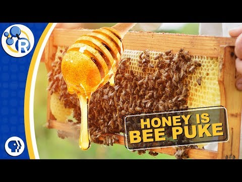 Did You Know Honey is Really Bee Puke?