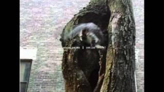 Kevin Drumm - Impish Tyrant