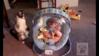Дети играют с кошками. Смешные животные.
