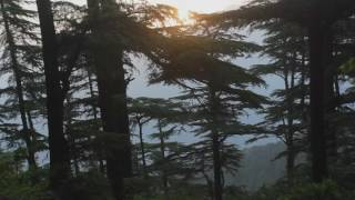 Music of the Himalayan Forest - India Music Project