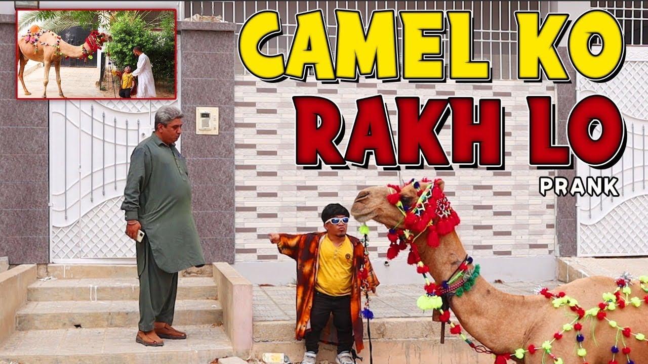   Camel Rakh lo Prank   By Rizwan Khan in   P4 Pakao   2021