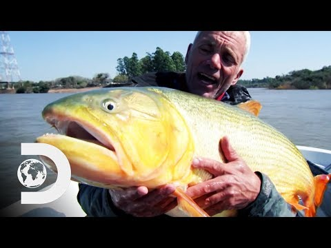 """Fishing For A Ferocious Golden Dorado In Argentina's """"River Of Blood"""" 