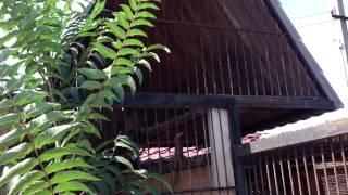 Домашний зоопарк в Васильевке/homezoo. Львы, грациозные создания.