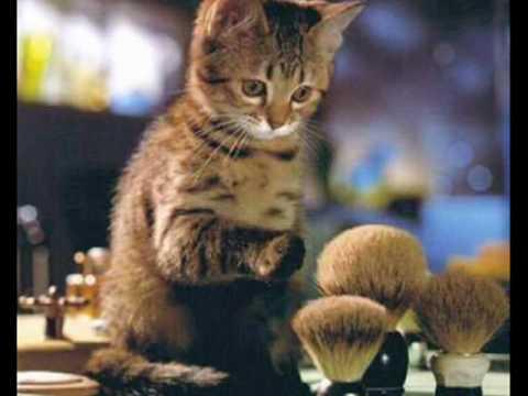 Cat MiminG