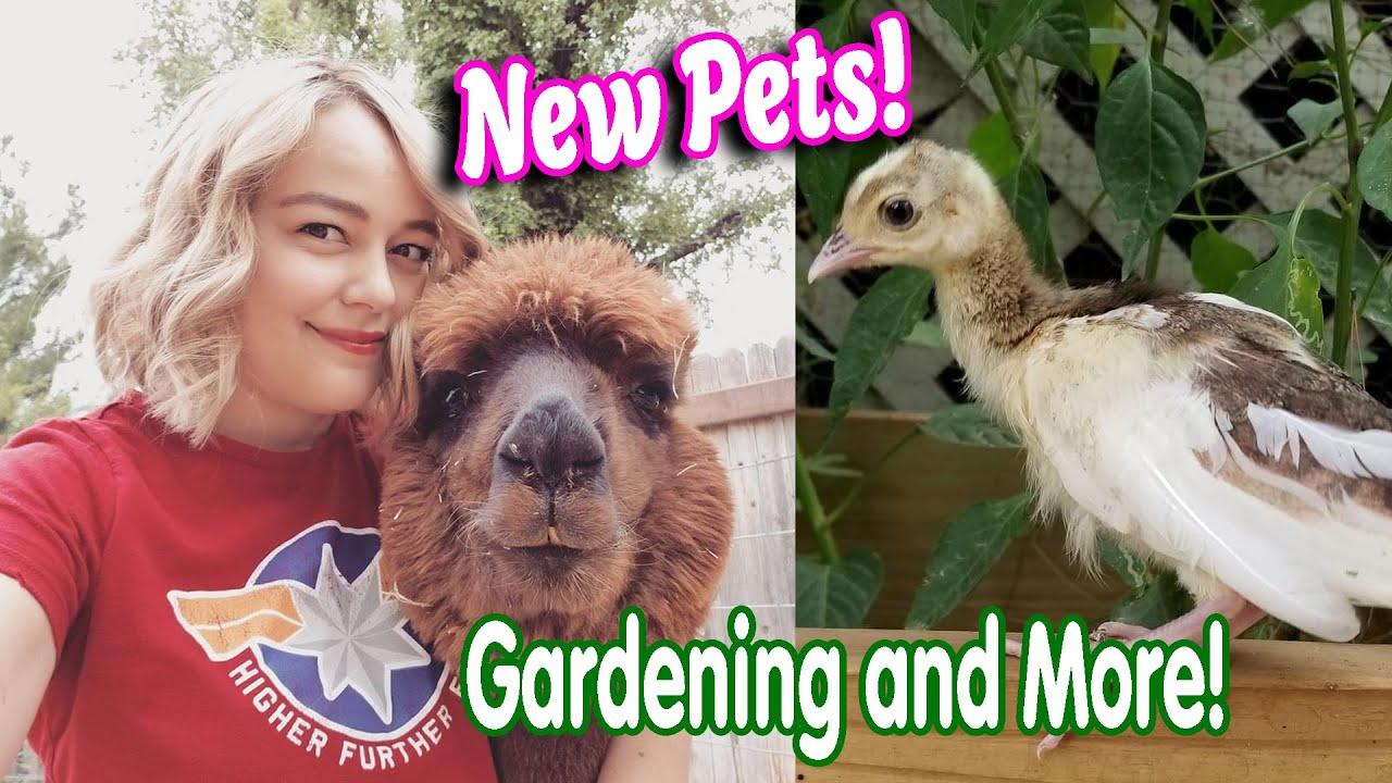 Summer Vlog 2020 New Pets, Gardening, & More