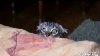 Самые смешные картинки про котов