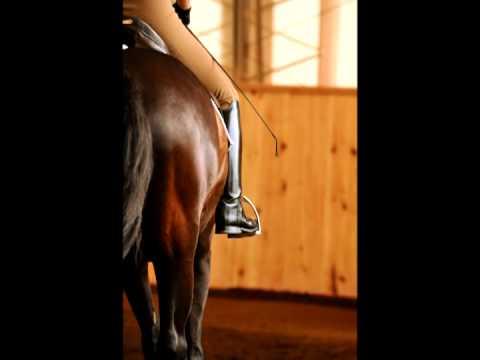Leg Aids - 40 Fundamentals of English Riding