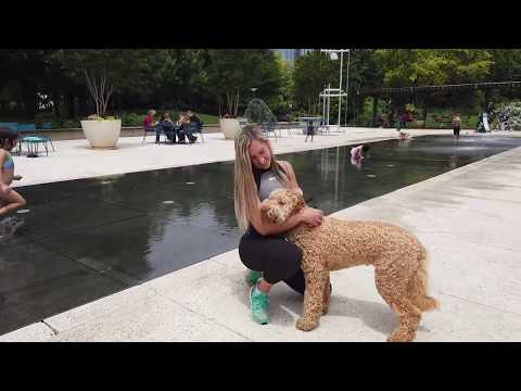 10 Month Old Goldendoodle | Best Doodle Dog Training | Off Leash K9 | Board and Train | Oklahoma