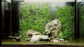 Bitkili Akvaryum Kurulumu Dizayn 74 (Tropica)