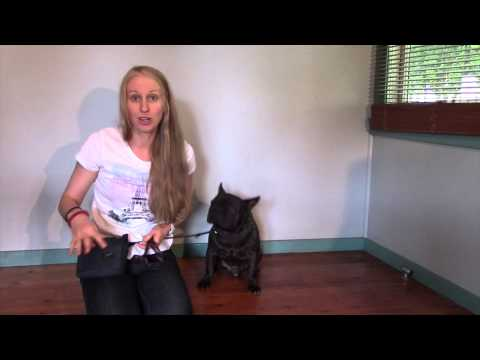 Part 5 Train My French Bulldog COME | Dog Training Tips