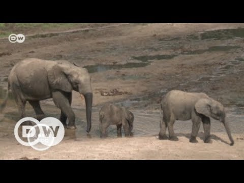 Wildlife in Areas of Armed Conflict   DW English