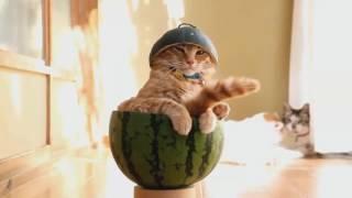 коты танцуют, и лучшие приколы в мире!