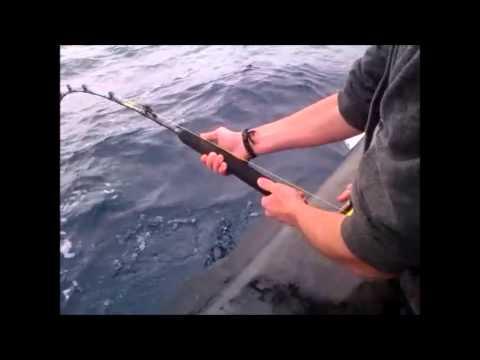 Mako shark in Bass Strait 8/01/2014