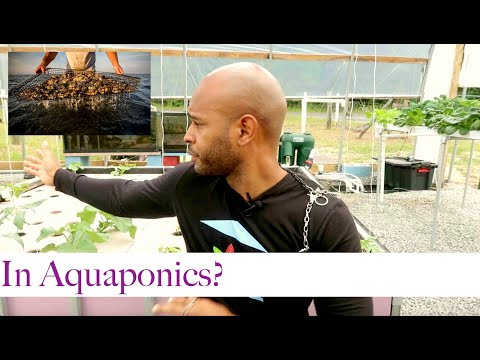 OYSTERS AND CLAMS IN AQUAPONICS?