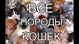 видео Породы кошек