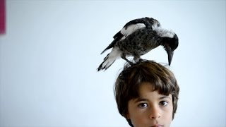 The True Story of How Penguin the Magpie Saved a Family