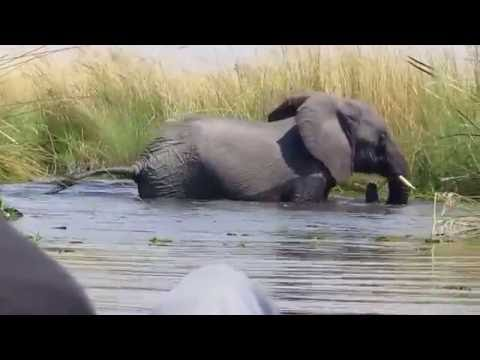 Sunway Botswana Okavango Elephants and Mokoro