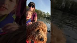 Paddling with pups. Kayaking with kids and dogs