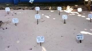 Инкубатор для редких видов черепах